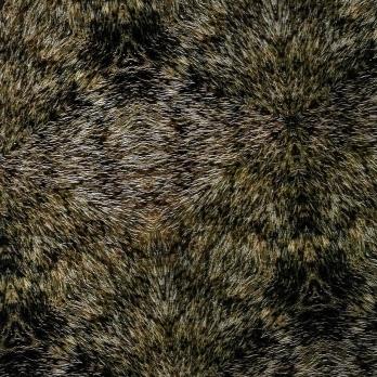 bear fur 2